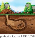 A guinea pig family living underground 43910758