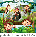 Monkey hanging on vine in forest 43911557