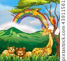 狮子 长颈鹿 自然 43911561