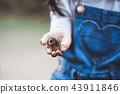 child girl hold rhinoceros beetle larvae on hand 43911846