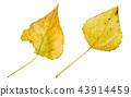 秋天秋葉水彩調味汁,秋天背景 43914459