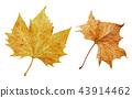 秋天秋葉水彩調味汁,秋天背景 43914462