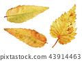 秋天秋葉水彩調味汁,秋天背景 43914463