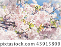 Sakura. Cherry blossoms japan. Pink spring blossom background. 43915809