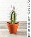 Small cactus in pot on gray wood table. 43915972