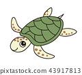 爬行動物 爬蟲類的 海龜 43917813
