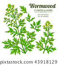 illustration, wormwood, floral 43918129