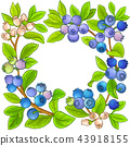 blueberry vector frame 43918155