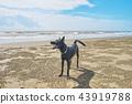 海边的狗 43919788
