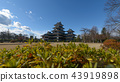 Matsumoto castle with a beautiful foreground 43919898