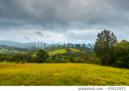 grassy rural meadow in mountains 43922925