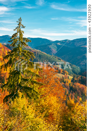 beautiful autumn background 43922930