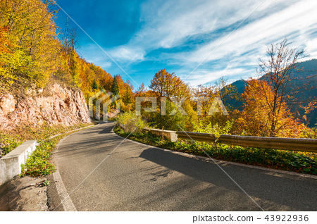 ride through fall foliage forest 43922936