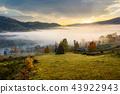 rural, autumn, fog 43922943