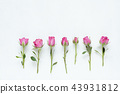 pink roses white background floral composition 43931812