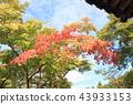 단풍 나무 단풍 43933153