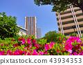 고층 아파트, 진달래, 철쭉 43934353