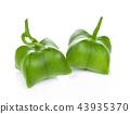fresh capsule seeds fruit of sacha-Inchi pea 43935370
