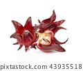 roselle fruits on white background. 43935518