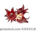 roselle fruits on white background. 43935518