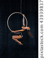 A young girl performs the acrobatic elements in the aerial hoop. Black Aqua Studio 43939837