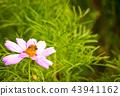 秋天 蜜蜂 花朵 43941162