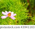 秋天 蜜蜂 花朵 43941163