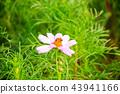 秋天 蜜蜂 花朵 43941166