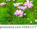 秋天 花朵 背景 43941177