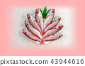 Acanthus(Nodogro) 43944616