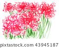 花朵 花 花卉 43945187