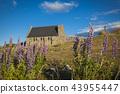 Chapel of the good shepherd Lake Tekapo 43955447
