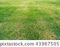 พื้นหลัง,พื้นหญ้า,ทุ่งนา 43967505