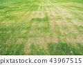 พื้นหลัง,พื้นหญ้า,ทุ่งนา 43967515