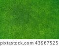 พื้นหลัง,พื้นหญ้า,ทุ่งนา 43967525
