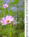 植物 花朵 台灣 43970298