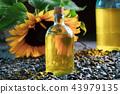 Bottle of fresh sunflower oil, seeds and sunflower 43979135