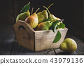 Fresh ripe pears in a wooden crate on wooden table 43979136
