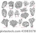 vegetable salad sketch 43983078