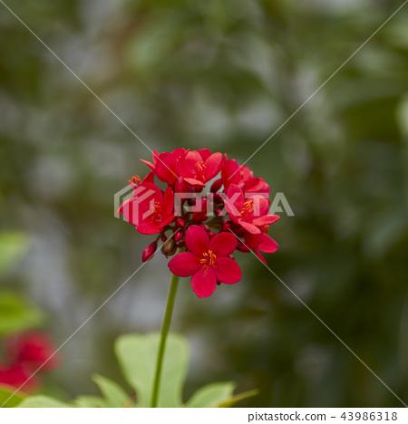 red flowers in the outdoor garden 43986318