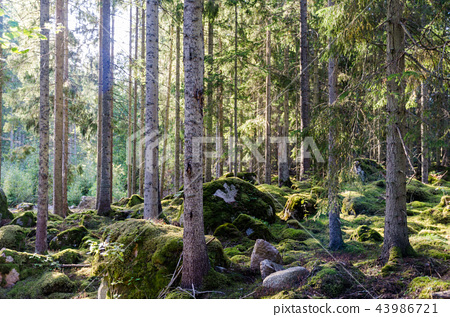 Beautiful bright green forest 43986721
