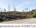 Clear cut forest by roadside 43986726