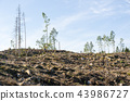 Renewable recources, harvested forest 43986727