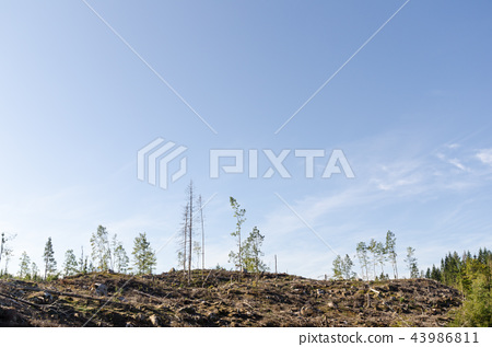 Clear cut forest area 43986811