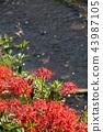 식물, 꽃, 플라워 43987105