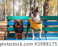 Dog friends sit on bench in autumn Park 43988175