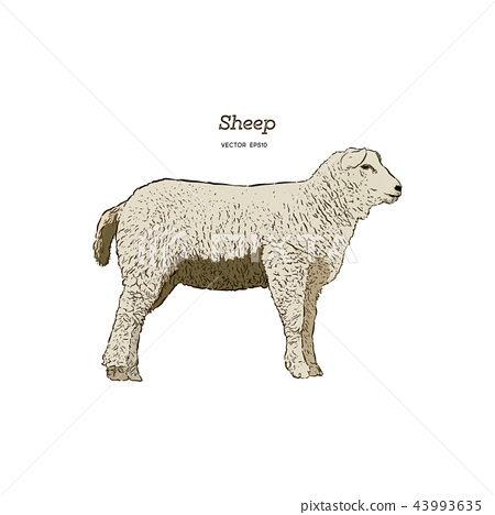 Sheep sketch style. 43993635