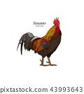 公雞 雞 雞肉 43993643