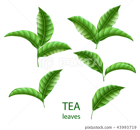 Set of realistic green tea leaves isolated. Green tea for your design, advertising and packaging 43993719