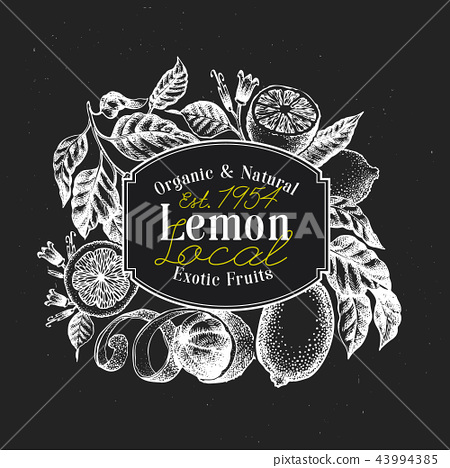 Lemon tree logo template. Hand drawn vector fruit illustration on chalk board. Engraved style 43994385